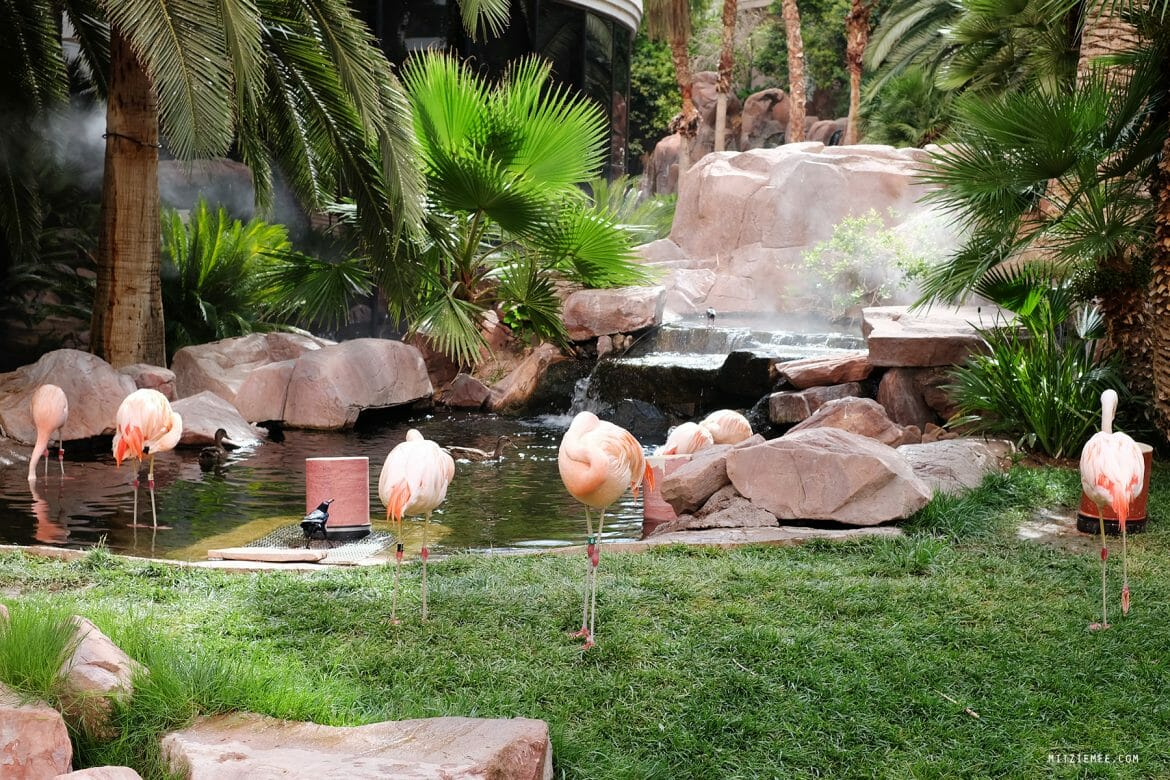 The Wildlife Habitat på Flamingo, Las Vegas