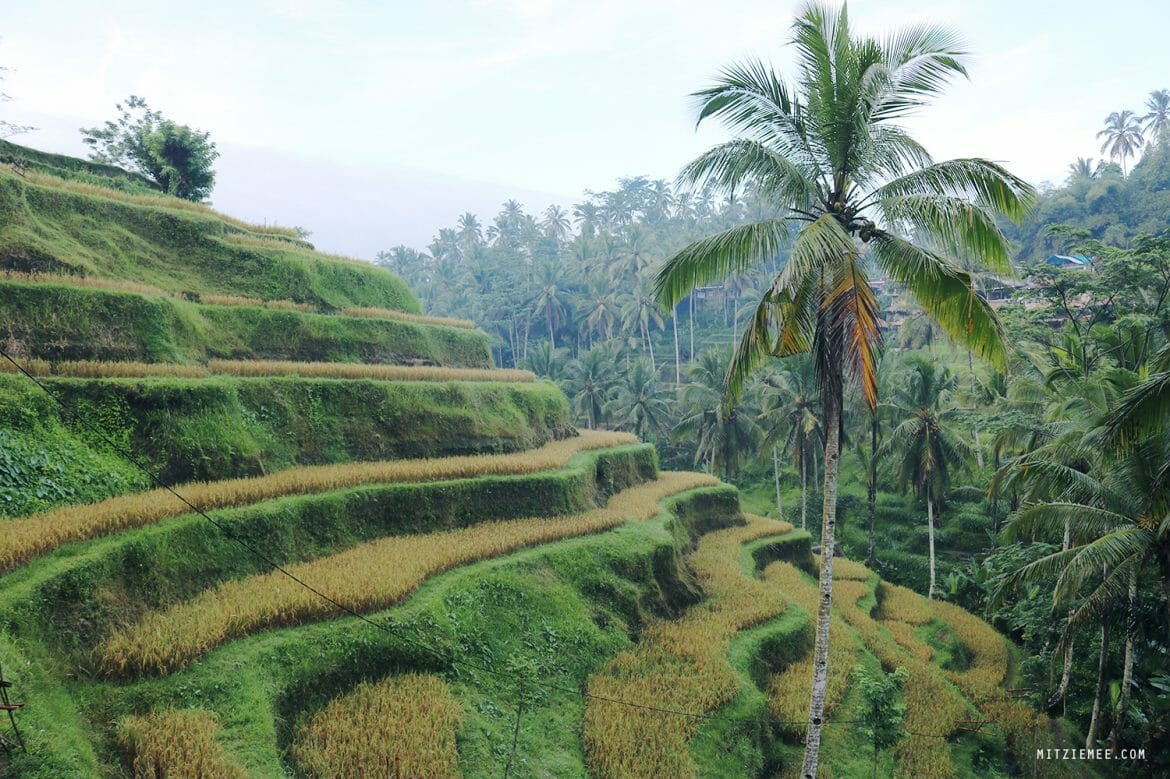 Tegallalang rice terraces, Bali
