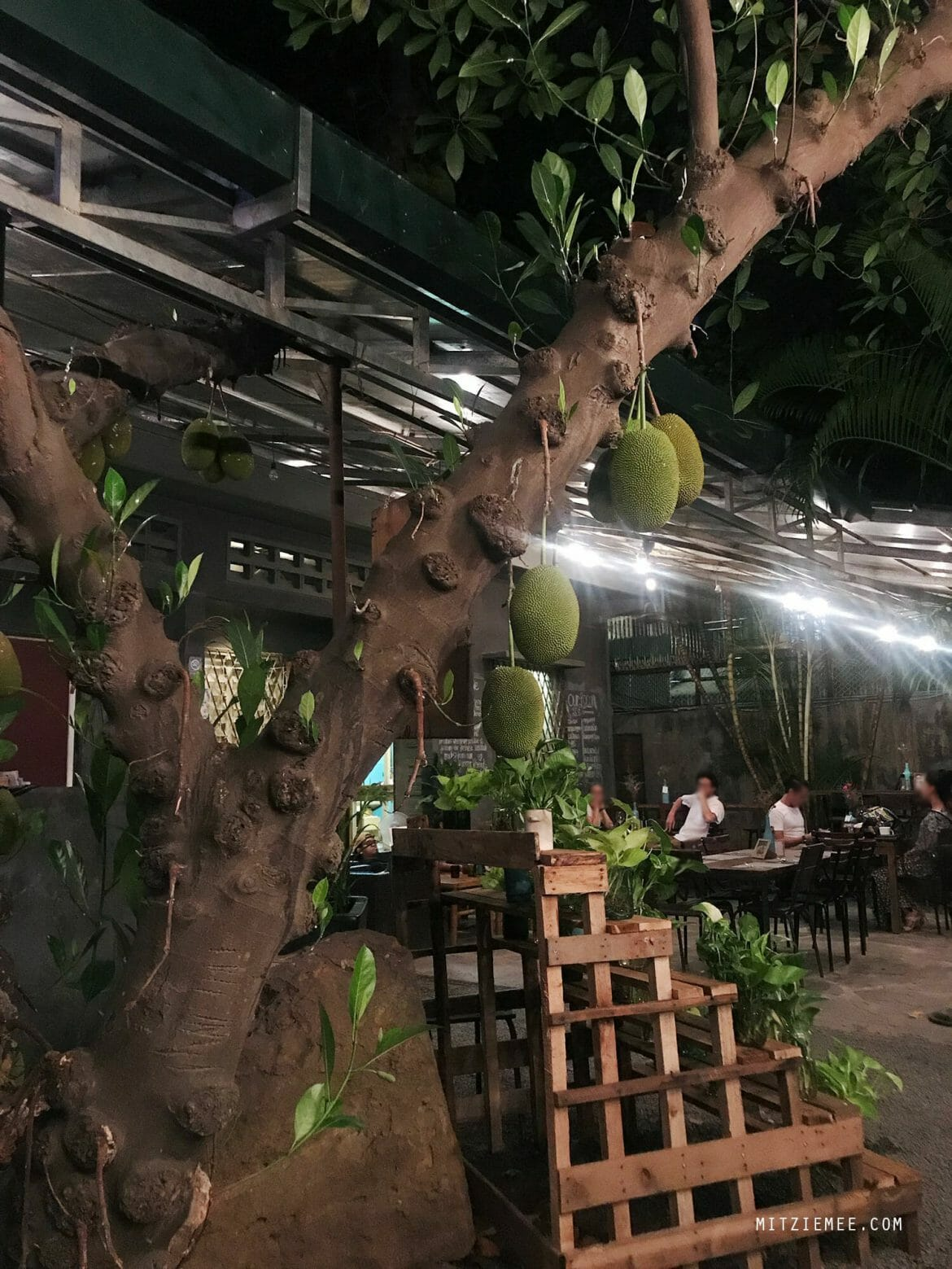 Jackfruit tree, Farm to Table Restaurant, Phnom Penh