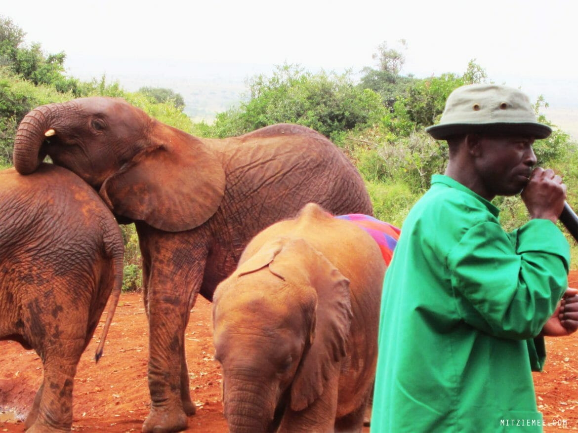 The Sheldrick Wildlife Trust Elephant Nursery in Nairobi