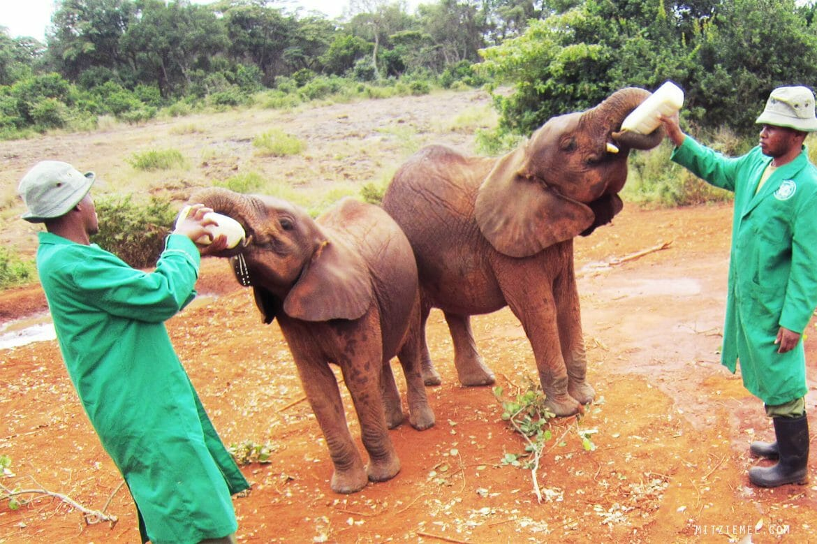 The Elephant Nursery at the Sheldrick Wildlife Trust in Nairobi